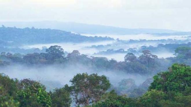 Guyane : contamination des populations au plomb et au mercure