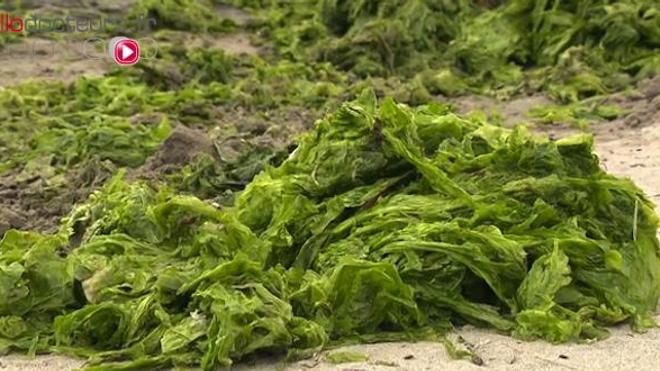 Algues vertes : un décès reconnu comme accident du travail