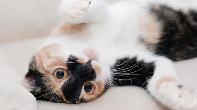 De nombreux Français dorment avec leurs animaux, même quand ceux-ci sont traités avec des néonicotinoïdes.