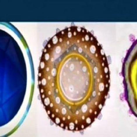 Hépatites : le foie en péril