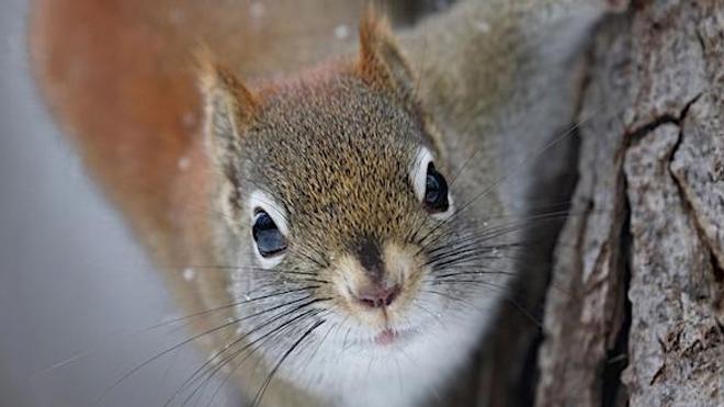 Un homme meurt de la maladie de Creutzfeldt-Jakob après avoir mangé le cerveau d'un écureuil