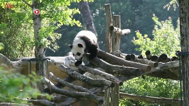 Zoo de Beauval : une clinique pour les animaux