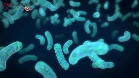 Leucémie : une greffe fécale pour protéger le microbiote