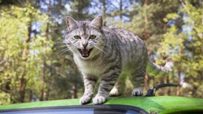 Un adolescent diagnostiqué schizophrène à cause d'une bactérie transmise par un chat