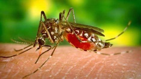 Dengue : un nouveau cas près de Lyon