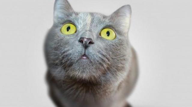 Les anti-puces pour chiens peuvent être mortels pour votre chat !