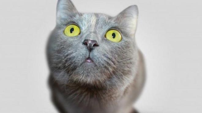 Les traitements à base de perméthrine sont toxiques pour les chats dès quelques gouttes