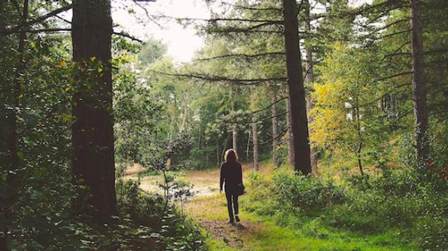 Eau qui coule ou chants d'oiseaux : écouter la nature est bon pour la santé