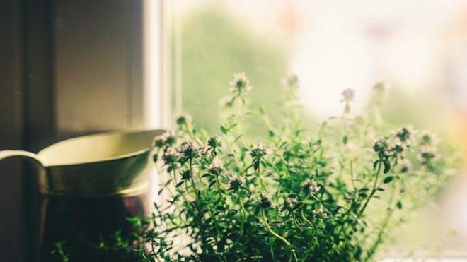 Verdir les abords des fenêtres contribue à limiter l'entrée de la chaleur dans les habitations. Crédits: Coyot/Pixabay