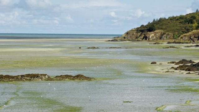"""""""Une marée verte"""" envahit à nouveau une partie de la Bretagne"""