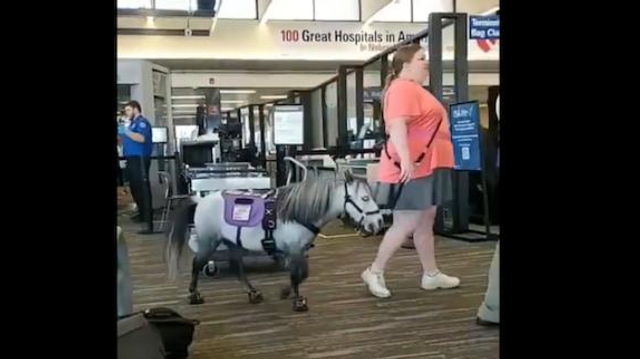 Elle voyage en avion… avec son cheval nain