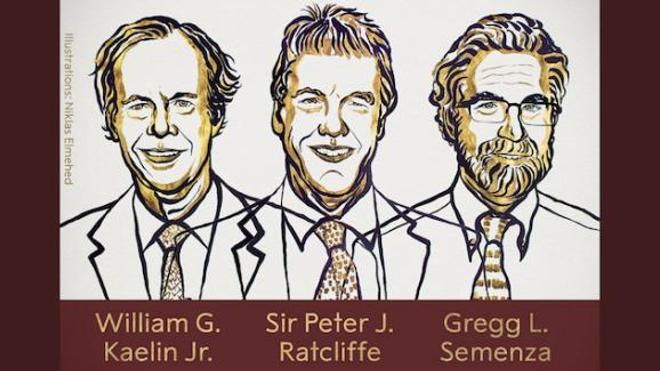 Les trois lauréats du prix Nobel de médecine 2019
