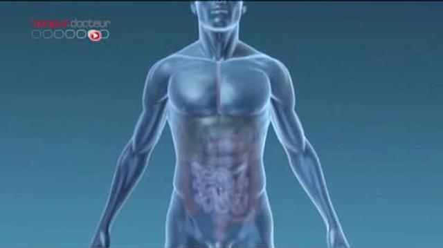 Organes : un foie reconstitué en laboratoire
