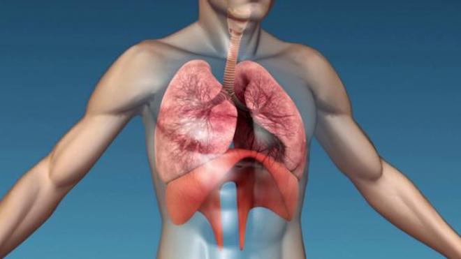 Le muscle du diaphragme permet aux poumons de bien se remplir et de se vider correctement.