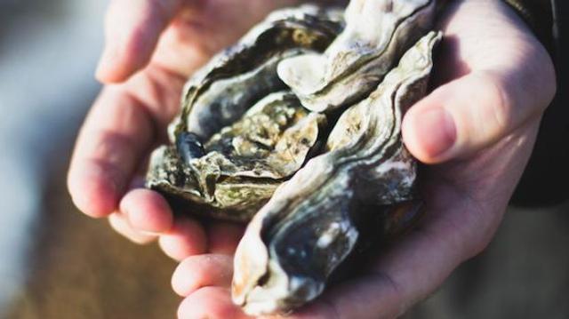 Gastro-entérite : les huîtres sont elles aussi contaminées par le virus