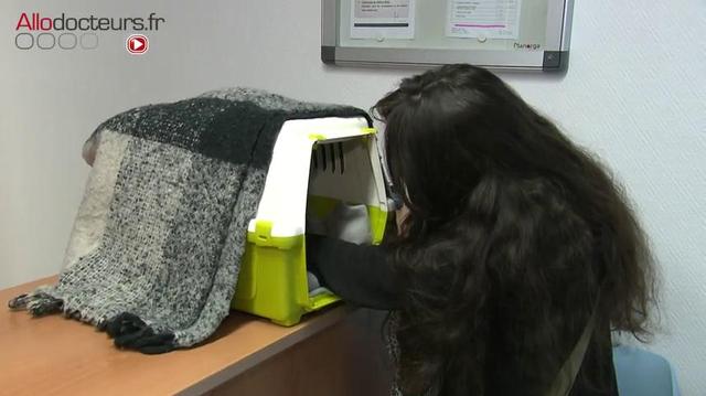 Strasbourg : un cabinet vétérinaire pour des soins à moindre prix