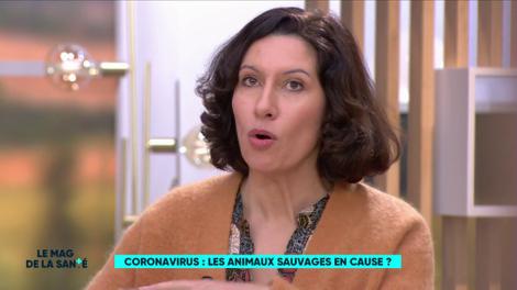 Coronavirus : les animaux sauvages en cause ?