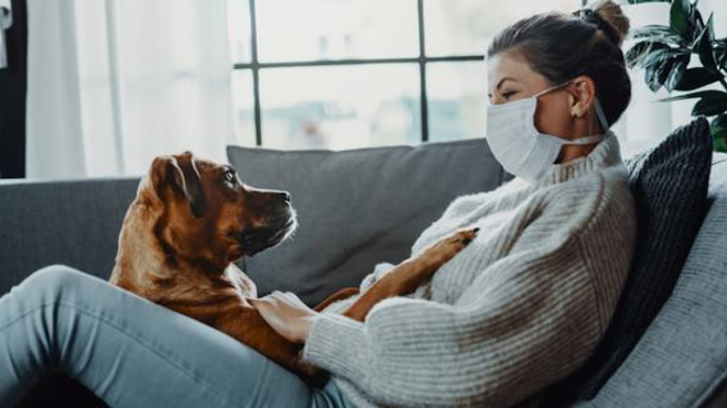 Coronavirus : les animaux de compagnie a priori peu touchés