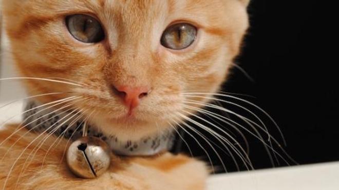Un chat testé positif au Covid-19 en France