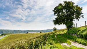 Est-ce dangereux d'habiter près d'un vignoble ? L'étude qui dérange