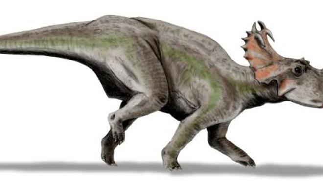 Le péroné d'un Centrosaurus révèle que les dinosaures pouvaient avoir un cancer
