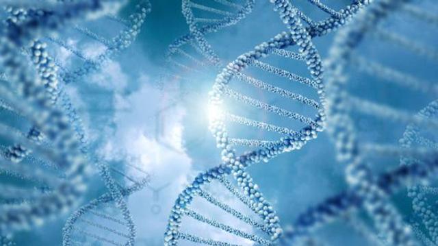 Téléthon : un essai de thérapie génique lancé pour la myopathie de Duchenne