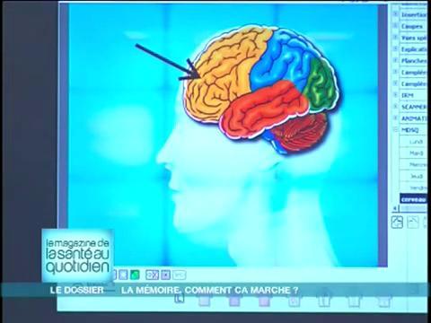 Marina Carrère d'Encausse vous décortique les différentes zones du cerveau en image
