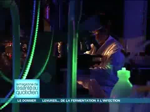 Les levures sont étudiées pour leur faire produire des molécules recherchées.