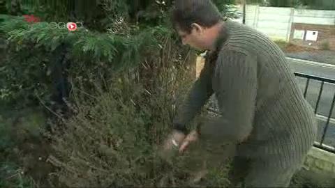 Patrick Vanaerde est un fan de tisanes, il cultive lui-même ses propres plantes.