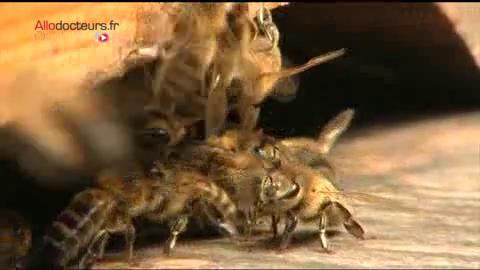 Le miel est analysé dans les centres d'études techniques apicoles.