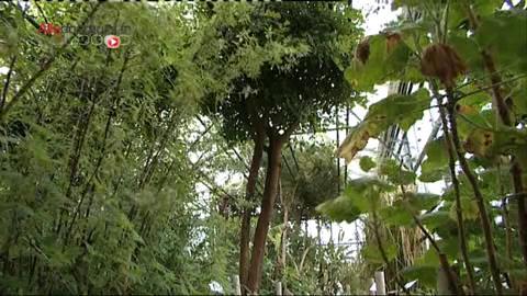Quelles plantes choisir pour lutter contre la constipation ?
