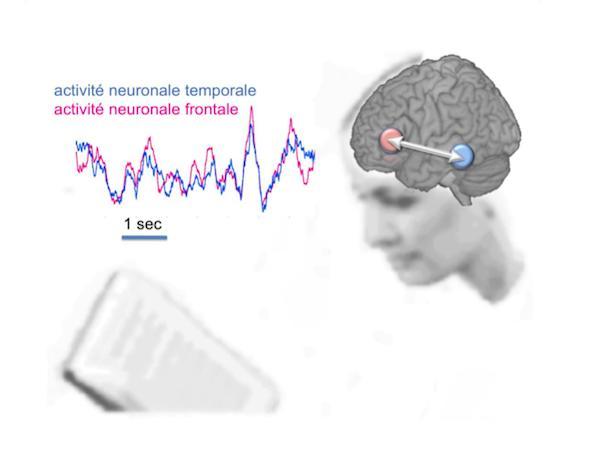 Dans le cerveau d'une personne qui lit, plusieurs zones interagissent pour accéder au sens du texte