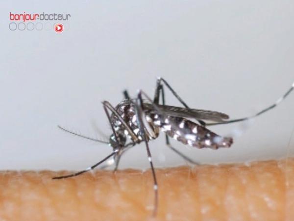 La dengue est une infection virale véhiculée par le moustique Aedes aegypti