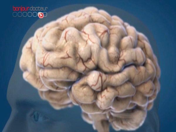 Les scientifiques se donnent jusqu'à 2023 pour modéliser le cerveau humain