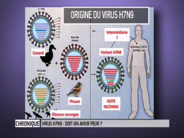 Origine du virus H7N9