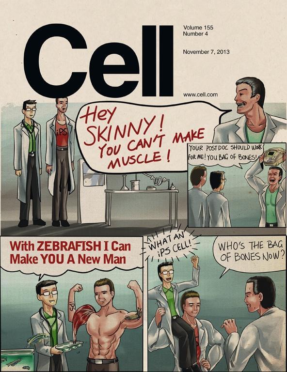 La couverture du numéro 155-4 de la revue Cell, signée Athens Qin