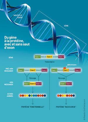 Schéma explicatif du saut d'exon. Source : Institut de biothérapie