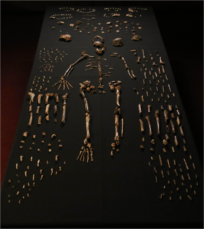 Ossements retrouvés dans la ''chambre Dinaledi''