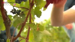 Comment réduire la teneur en alcool du vin ?