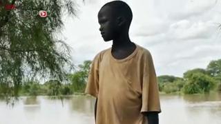 Pénurie de l'anti-venin Fav-Afrique