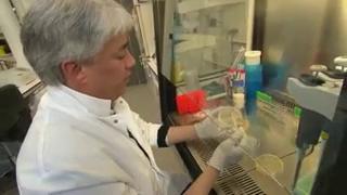 À l'Institut Pasteur, une équipe de chercheurs tente d'élucider les mécanismes du staphylocoque doré