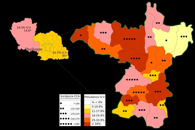 Sur la carte de gauche, la région de l'Issan occupe l'essentiel de la zone identifiée en jaune. La carte de droite présente la prévalence du cholangiocarcinome (CCA) et du parasite (OV) entre 1990 et 2001 dans l'une des provinces de l'Issan, le Khon Kaen.