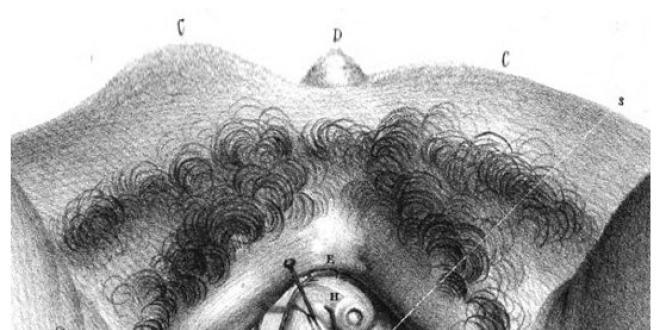 1834 Blandin - esquise des bulbes vestibulaires