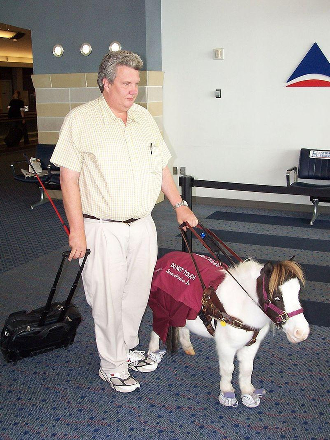 Les chevaux-guides doivent porter des baskets en métal. Photo : Flickr/DanDee Shots CC 2.0