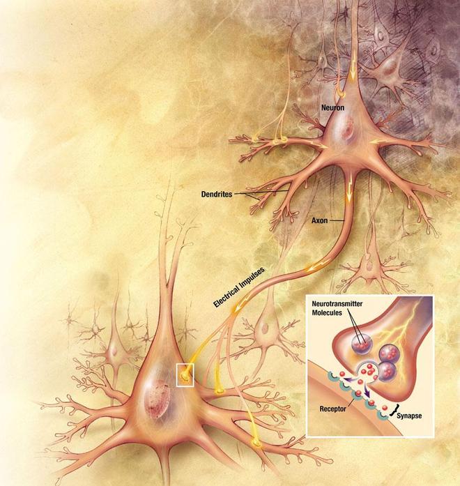 Sur cette représentation on peut voir la fusion des vésicules synaptiques (en violet) et la libération de neurotransmetteurs dans la synapse. Crédit : cc-by-sa PD-USGOV