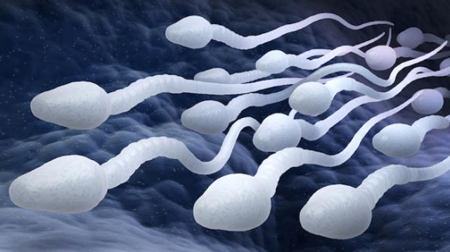 Le covid pourrait altérer la qualité du sperme