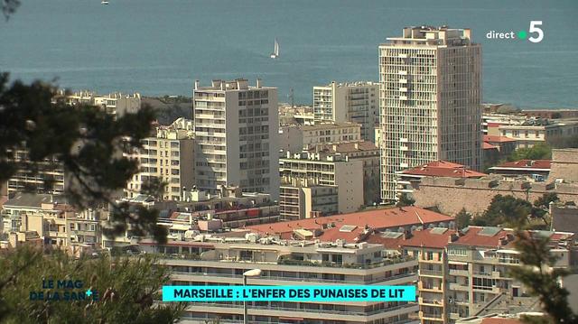 À Marseille, la lutte contre l'invasion des punaises de lit