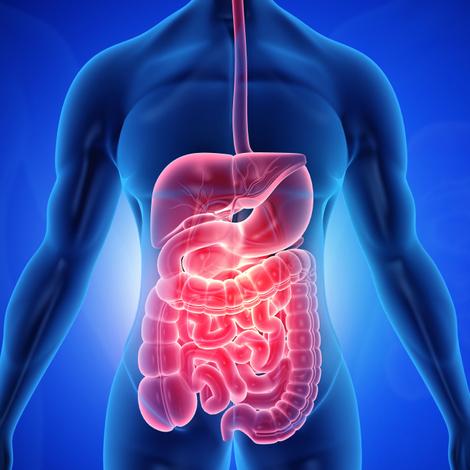 Les MICI : l'inflammation chronique des intestins