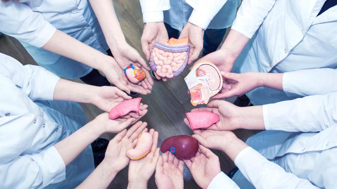 La greffe, du prélèvement à la transplantation
