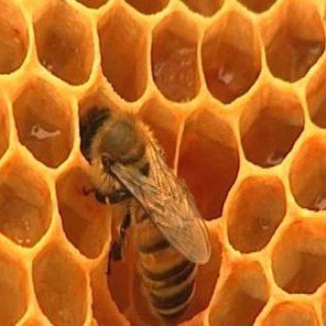Les vertus thérapeutiques du miel